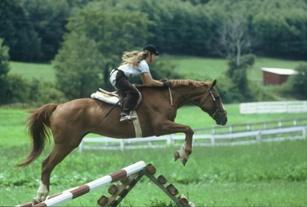 Horseback Riding Summer Camp