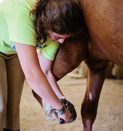 Equestrian-Summer-camps.jpg